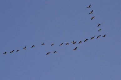 flock-286062_1280